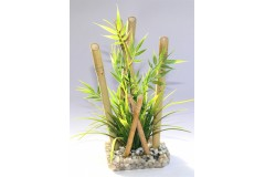Bamboo large plants 25cm